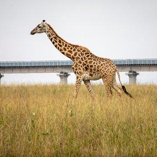 Dwars door dit natuurpark ligt een kilometers lange Chinese spoorlijn