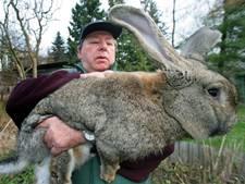 Eén van de grootste konijnen ter wereld  dood na vlucht United Airlines