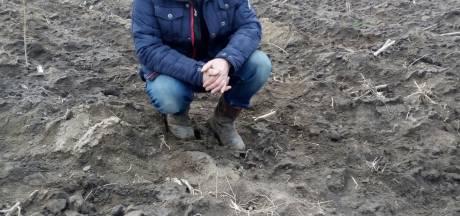Eerste Overijssels kievitsei gevonden in Genemuiden