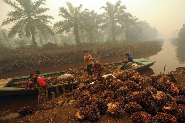Rook van de branden verduistert de zon in Sumatra. Beeld reuters