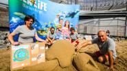 Sea Life oefent voor wereldrecord zeeschildpaddensculpturen bouwen