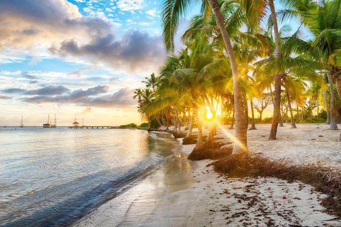 La plage de l'Anse Champagne, située en plein cœur du lagon de Saint-François, en Guadeloupe.
