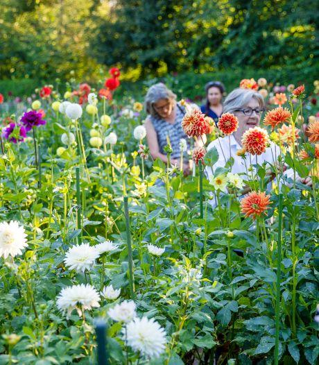 Dahliatuin van Maria Middelares fleurt  de Genneper Parken op
