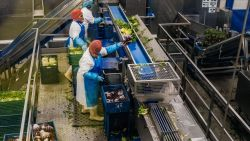 Listeriabesmetting kost Greenyard bijna derde van zijn beurswaarde
