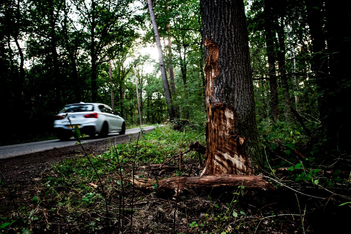 De boom is een stille getuige van het ongeval in Uddel waarbij een 26-jarige man uit die plaats om het leven kwam.