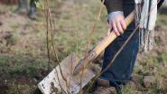 Natuurpunt plant duizend nieuwe bomen in Molenbos