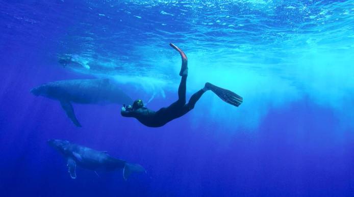 Natuurfilmer Dick Harrewijn tijdens zijn ontmoeting met de bultruggen in de Stille Oceaan