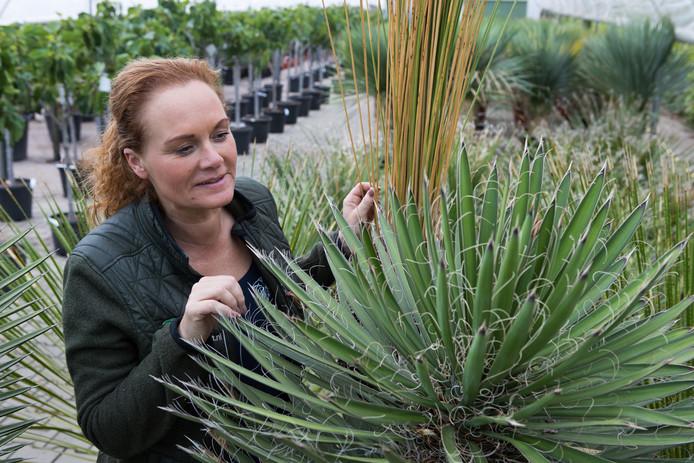 Monique Dorsten , eigenaar van tuincentrum Palmexpert nabij Ommen, baalt enorm van de diefstal van haar planten. De schade bedraagt ongeveer 1500 euro.