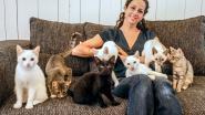 """Sluiting dreigt voor kattencafé Kuro Neko: """"Tenzij er een overnemer opdaagt"""""""