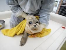 Noodklok geluid over vele dode zeehondenpups