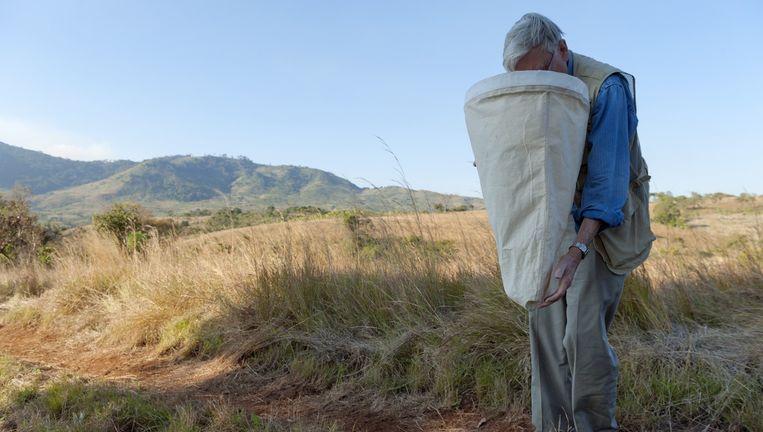 Edward Wilson bekijkt insecten die hij heeft gevangen in Mozambique. Beeld Hollandse Hoogte