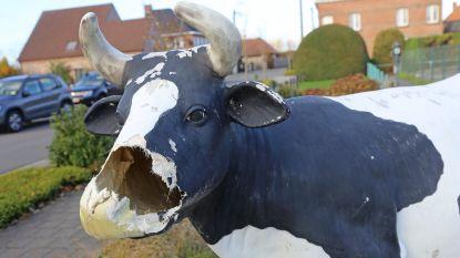 Vandalen vernielen koe Charlotte