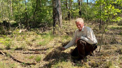 "Ook bosgebied rond voormalig NAVO-vliegveld  kwetsbaar: ""Het bovenste laagje dorre vegetatie is momenteel extreem brandbaar"""