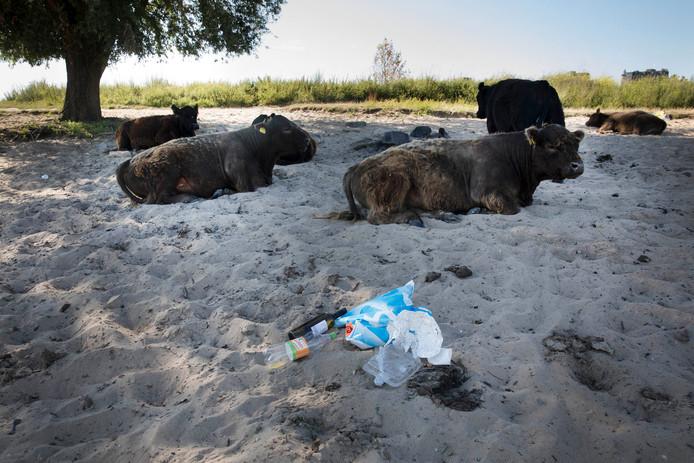 Afval op het Waalstrand bij Nijmegen.