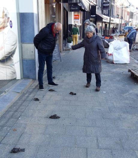 Ook in Breda vallen spreeuwen opeens dood uit de lucht