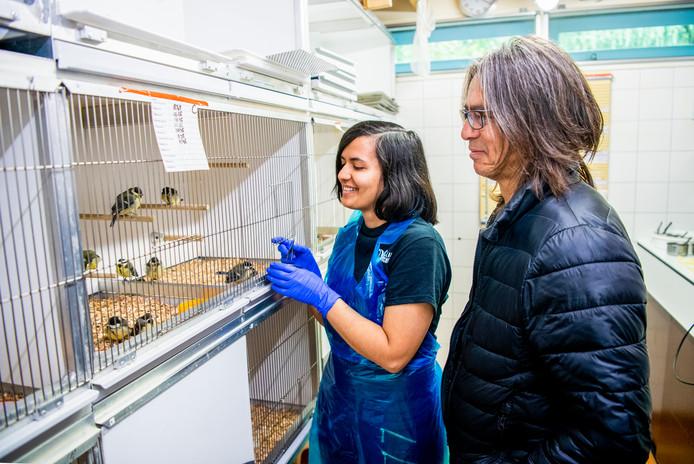 Stichting Vogelklas Karel Schot vangt zo'n vijftig tot zeventig vogels per dag op.