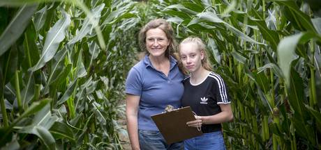 Eindeloos dwalen en puzzelen in het maisdoolhof in Buurse