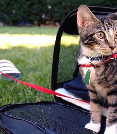 Kattenliefhebbers likken hun snorharen af bij Cat VideoFest