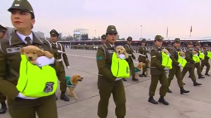 Schattige puppy's stelen de show op militaire parade