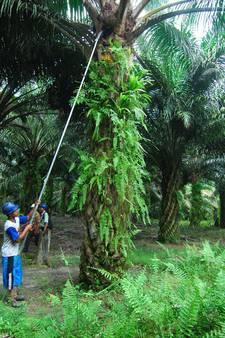 'Verzekeraars moeten meer doen tegen ontbossing'