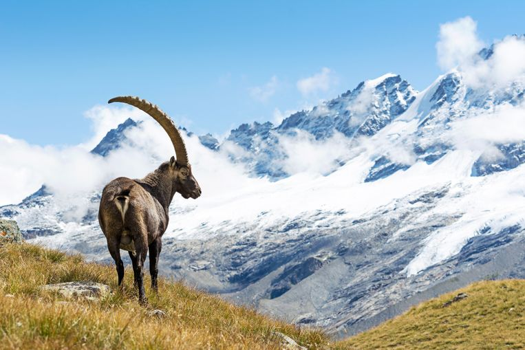 Het majestueuze Gran Paradiso nationaal park ligt vlak bij Locana.