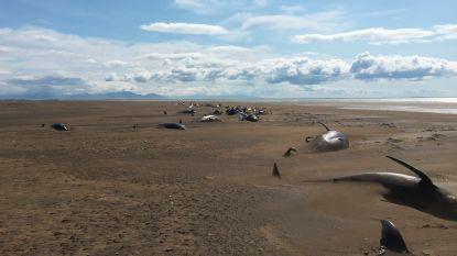 Toeristen doen lugubere ontdekking in West-IJsland: tientallen dode grienden op afgelegen strand