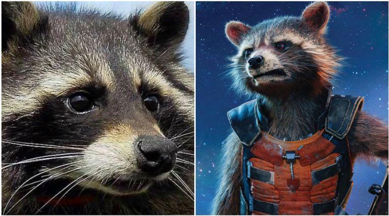 Oreo (links) en Rocket uit de film (rechts).