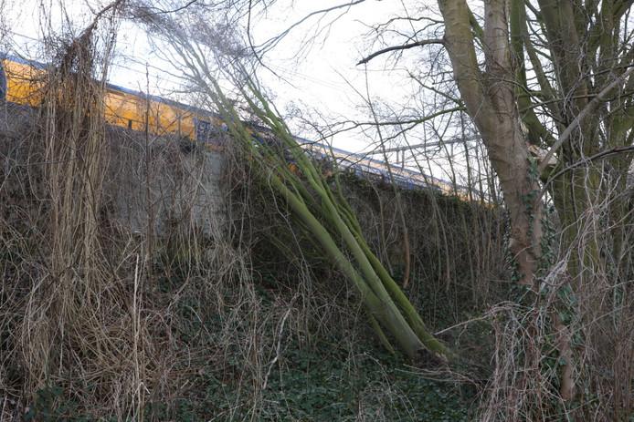 Boom op het spoor tussen Den Bosch en Vught