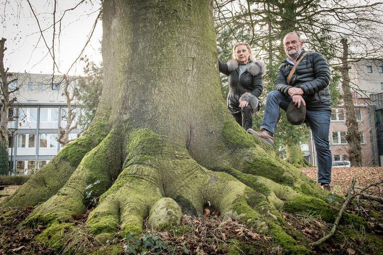Guido Schaubroeck van Meer Bomen in Roeselare en buurtbewoonster Lieve Van Robaeys zien de stevige stammen niet graag verdwijnen voor een nieuw ACV-kantoor .