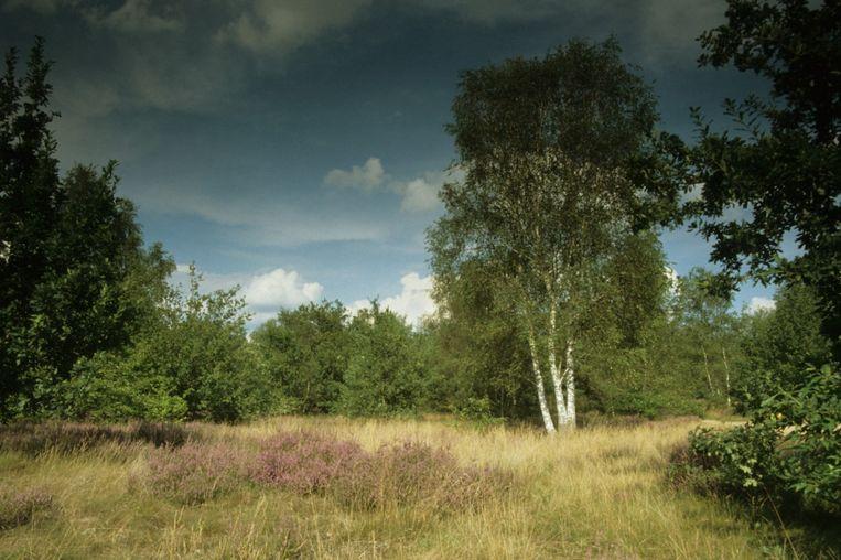 In het natuurgebied Lovenhoek zullen de komende maanden herinrichtingswerken plaatsvinden