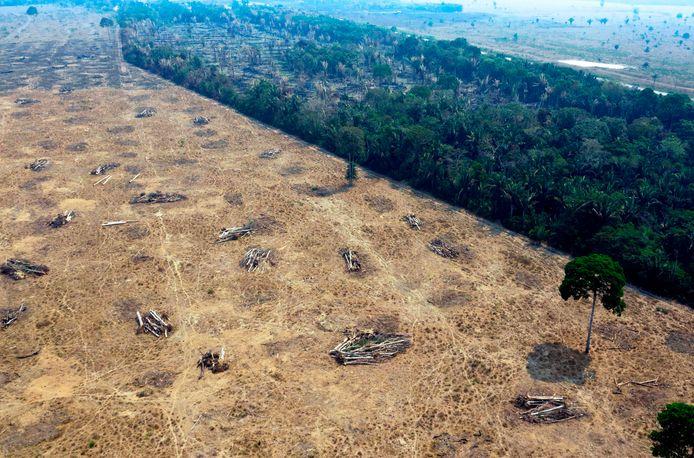 En juillet 2019 (la photo est datée au mois d'août 2019), la déforestation en Amazonie avait atteint un niveau exceptionnel, avec 2.255 km² déboisés au total.