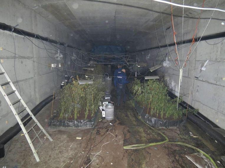 De wietplantage