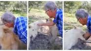 VIDEO. Zuid-Afrikaan aait leeuwin en wordt gebeten