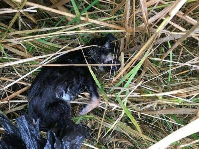 Deze pup werd - dood - gevonden in een vuilniszak in een Lelystads bos.