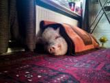 Honderd kilo, tweeduizend fans: álles aan het roze fotomodel Francis Bacon blijft groeien