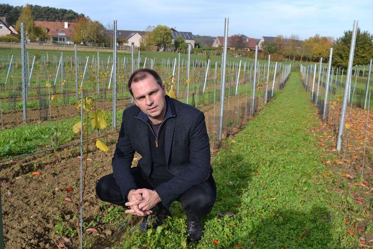 Luc Haekens in zijn wijngaard.