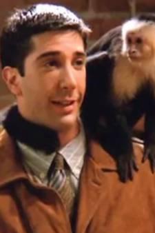 Marcel, le singe de Ross dans Friends, décroche un nouveau rôle