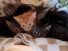 Vijf kittens in dichtgeknoopte plastic zak gedumpt