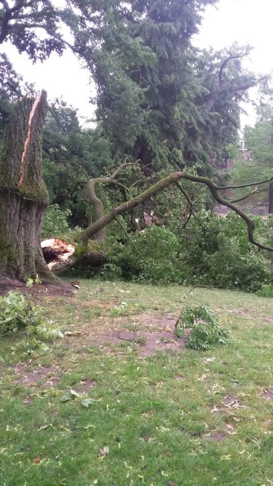 Ook in het Kronenburgerpark zijn er veel bomen waarvan takken zijn afgescheurd.