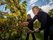 Warm 2018 maakt wijnboeren dronken van geluk