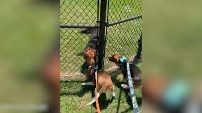 Hond staat te springen om beste vriendin terug te zien na quarantaine