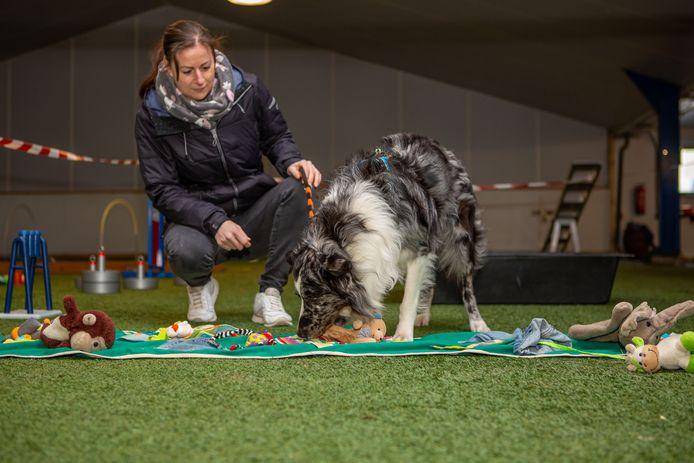 De escaperoom voor honden. Knoxx, met op de achtergrond baasje Yaninick, zoekt tussen de speeltjes naar een lekkernij.