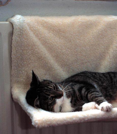 Onze bejaarde kat is het enige schepsel dat totáál floreert tijdens deze gehele coronacrisis