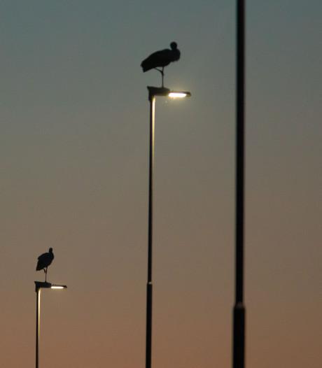 Zuidplas zit te vaak in het donker: veel klachten over lantarenpalen