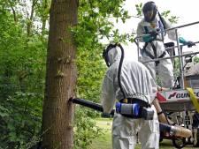 'Maanmannetjes' ruimen eikenprocessierups in Koewacht