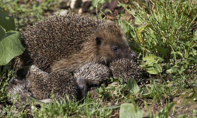 Super Warme herfst houdt dieren uit winterslaap | buitenland | De Morgen @AH93