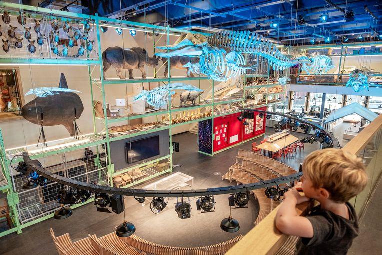 Opbouw van de LiveScience zaal van het nieuwe Naturalis.  Beeld Patrick Post