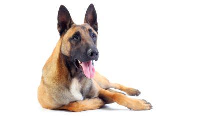 Geseinde man belt politie voor ontsnapte hond, maar gebruikt hond dan om agenten te bedreigen