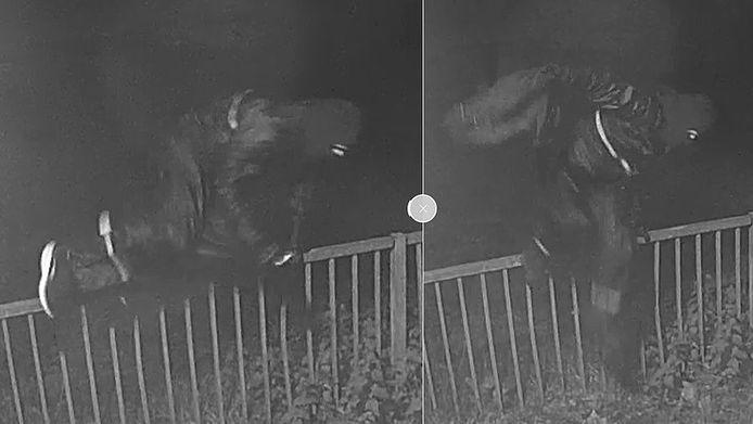 Bewakingsbeelden bij de Jumbo in Malvert, waar de daders rechtsomkeert maken nadat een medewerkster de deur dicht heeft gedaan.