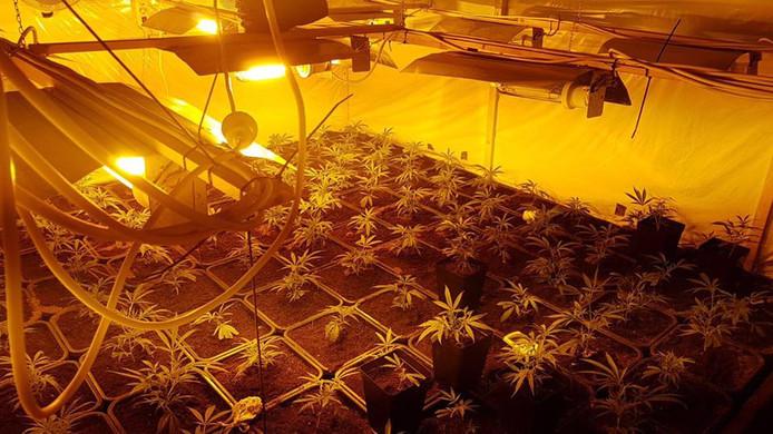 De kweekruimte met wietplanten die in april werd gevonden in de Duivense woning.